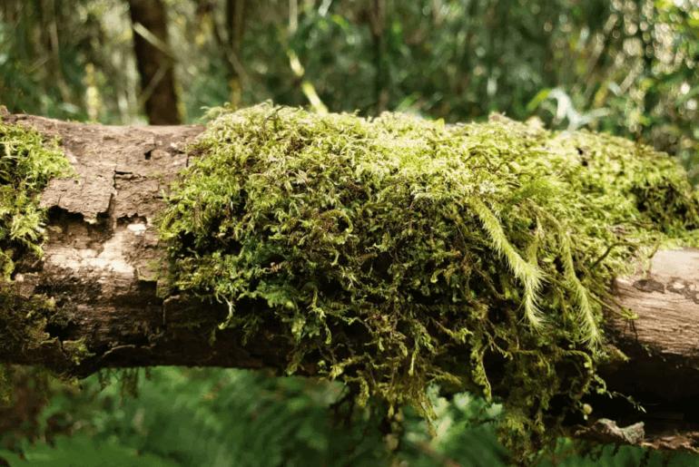 Los Quetzales National Park, Costa Rica